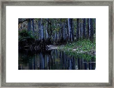 Fisheating Creek 29 Framed Print by Carol Kay