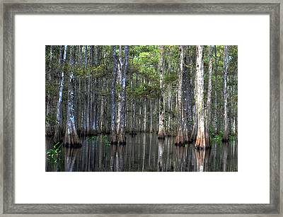 Fisheating Creek Framed Print by Bob Jackson
