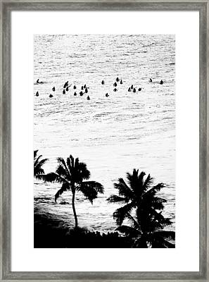 Fisher Palms Framed Print by Sean Davey