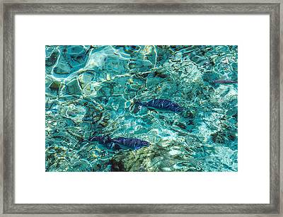 Fishes In The Clear Water. Maldives Framed Print by Jenny Rainbow