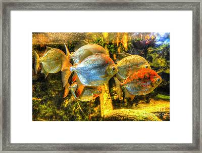 Fishfull Thinking Framed Print