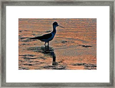 Fishing At Sunset Framed Print
