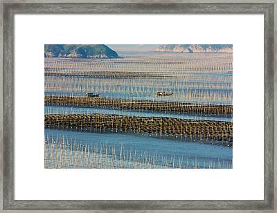 Fishing Boat Sailing Through Bamboo Framed Print