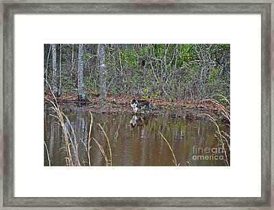 Fishing Feline Framed Print by Al Powell Photography USA