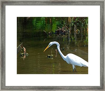 Fishing For Food Wil 368 Framed Print