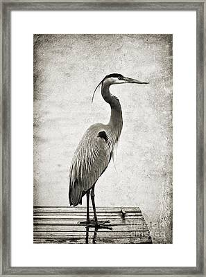 Fishing From The Dock Framed Print
