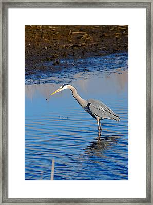 Framed Print featuring the photograph Fishing by Gary Wightman