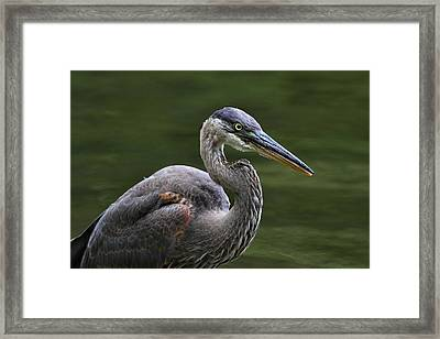 Fishing Framed Print by Mike Farslow