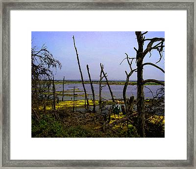 Fishing The Bottomlands Framed Print by Timothy Bulone