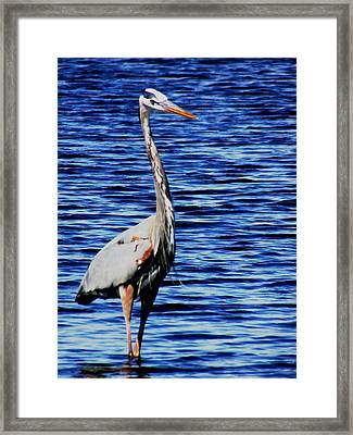 Fishing Framed Print by Will Boutin Photos