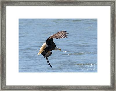Fishing With Talons Framed Print