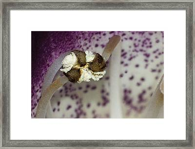 Framed Print featuring the photograph Fist Or Puff Ball by Robert Culver