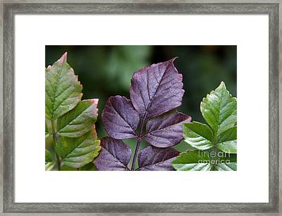 Fitting In Framed Print by Dan Holm