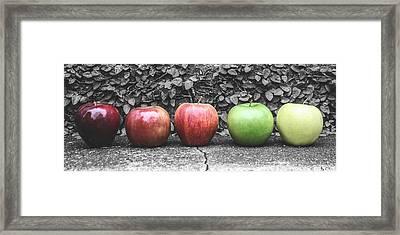 Five Apples  Framed Print by Steven  Taylor