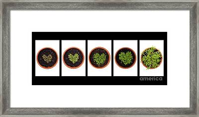 Five Days On Black Framed Print by Anne Gilbert