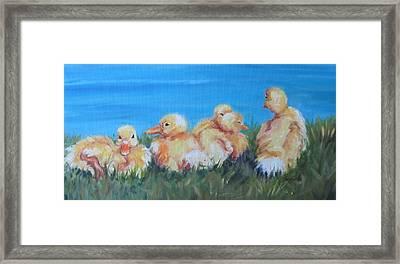 Five Ducklings Framed Print