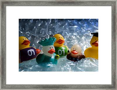 Five Ducks In A Row Framed Print