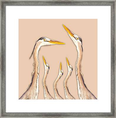 Five Herons Framed Print by Betsy Knapp