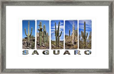 Five Saguaros Framed Print by Kelley King