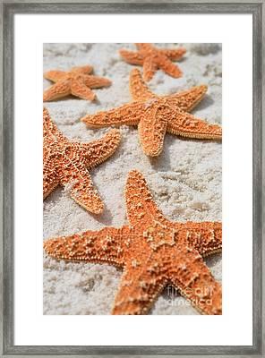 Five Starfish Framed Print by Carol McGunagle