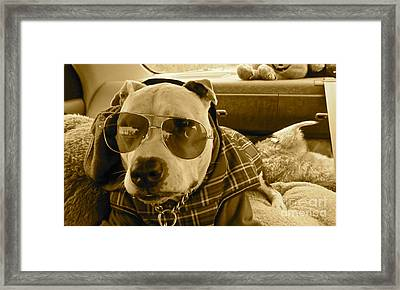 Fix My Sunglasses.... Framed Print by Q's House of Art ArtandFinePhotography