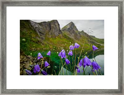 Fjord Flowers Framed Print