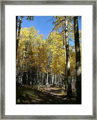 Flagstaff Aspens 802 Framed Print