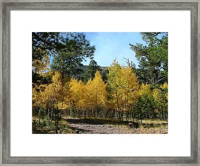 Flagstaff Aspens 804 Framed Print