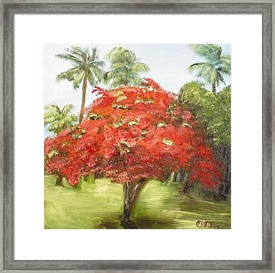 Flamboyan Framed Print