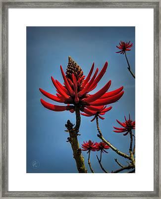 Flamboyant 001 Framed Print by Lance Vaughn