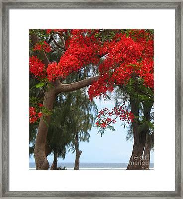 Flamboyant - Ile De La Reunion - Reunion Island Framed Print by Francoise Leandre