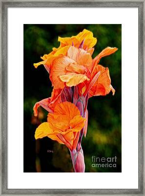 Flamboyant Orange Cannas Framed Print by Patrick Witz