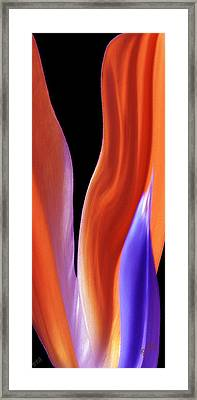 Flame - Bird Of Paradise   Framed Print