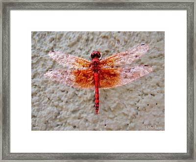 Flame Dragonfly  Framed Print