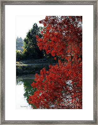 Flame Red Tree Framed Print