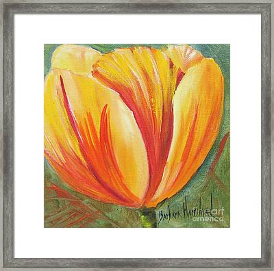 Flame Tulip By Barbara Haviland Framed Print