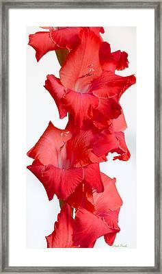 Flamenco Framed Print by Heidi Smith