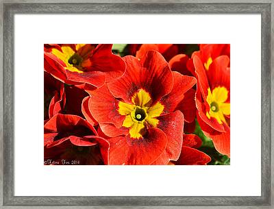 Flamenco Look Framed Print