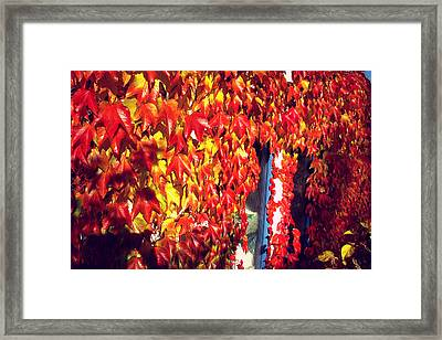 Framed Print featuring the photograph Flaming Autumn Leaves by Art Photography