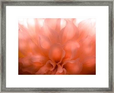 Flaming Dahlia Framed Print by Karen Wiles
