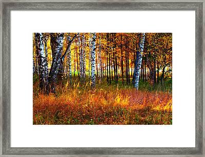 Flaming Grass Framed Print by Jenny Rainbow