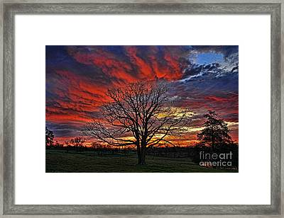 Flaming Oak Sunrise Framed Print by Reid Callaway