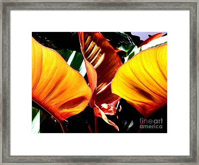 Framed Print featuring the photograph Flaming Plant by Kristine Merc