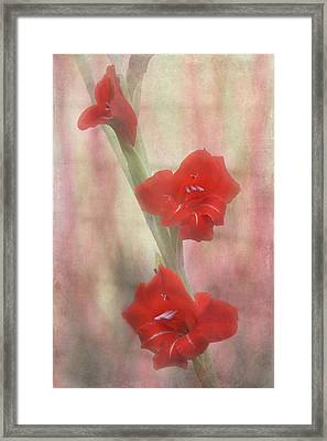 Flaming Red Framed Print