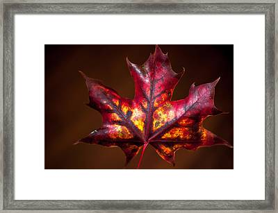 Framed Print featuring the photograph Flaming Red  by Crystal Hoeveler