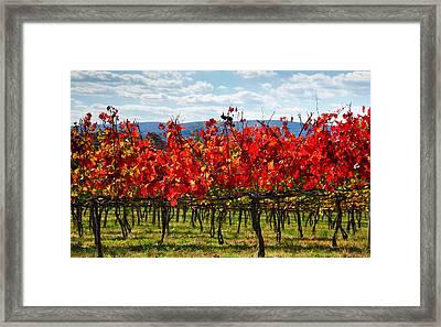 Flaming Vineyard Framed Print by Steven Ainsworth