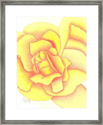 Flaming Yellow Rose Framed Print by Dusty Reed