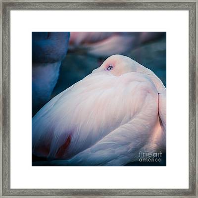 Flamingo 1b - Square Framed Print by Hannes Cmarits