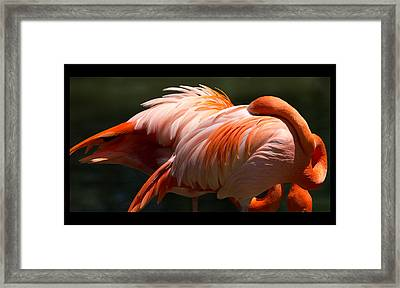 Flamingo Abyss Framed Print by John Kunze