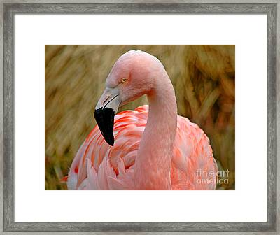 Framed Print featuring the photograph Flamingo Art by Nick  Boren